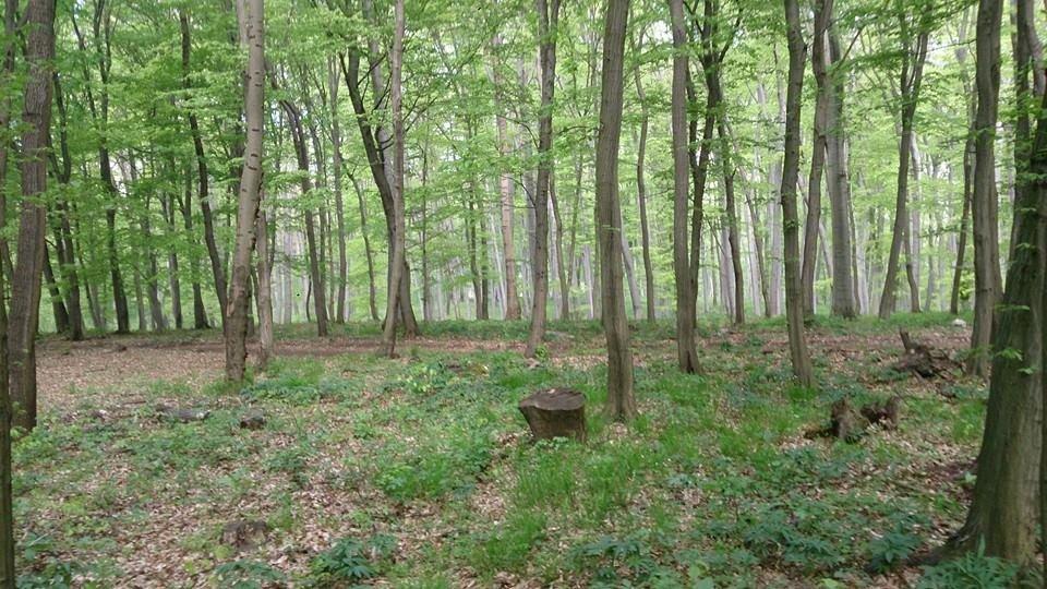 A várgesztesi erdő