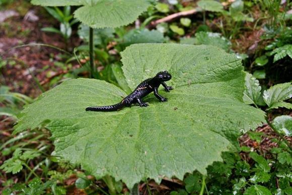 Szinte mindenhol szalamandrák ültek, álltak és másztak.