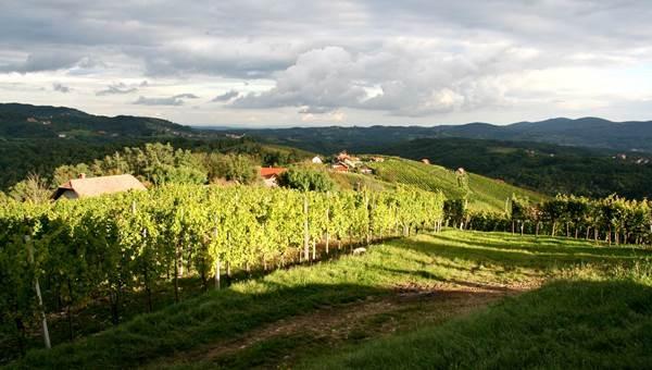 Bela Krajina szőlővidék túra