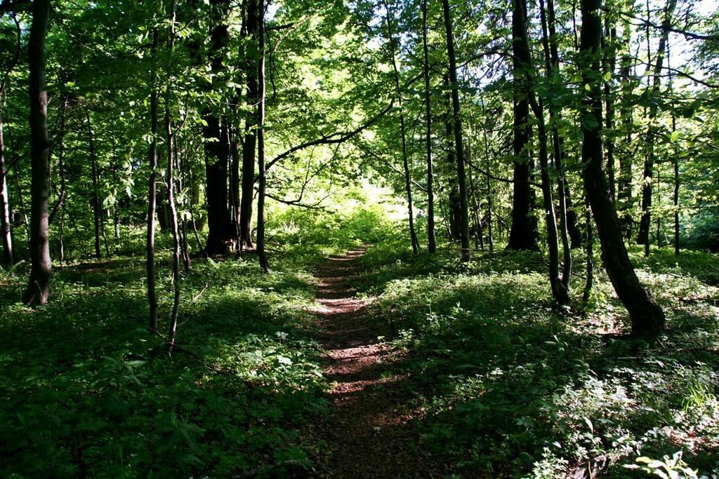 Lejjebb ereszkedve az erdőben elhagyjuk a fenyőfákat