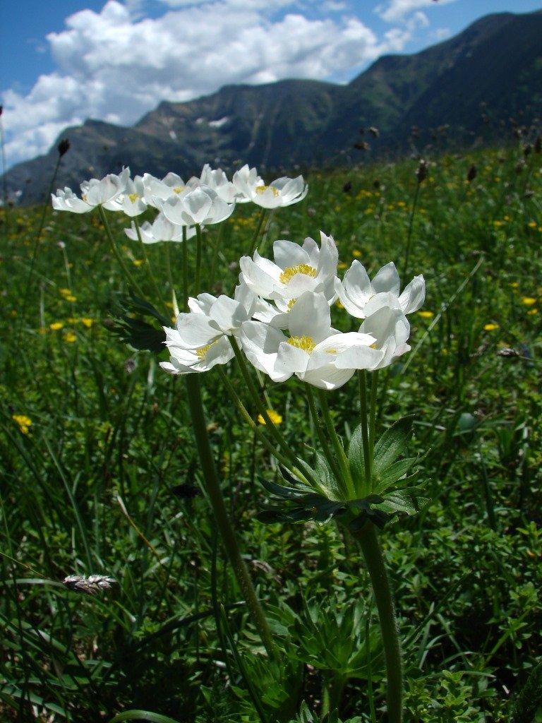 Jalóci-völgyből az Anyóka-hegyen át a Szürke-hegyre