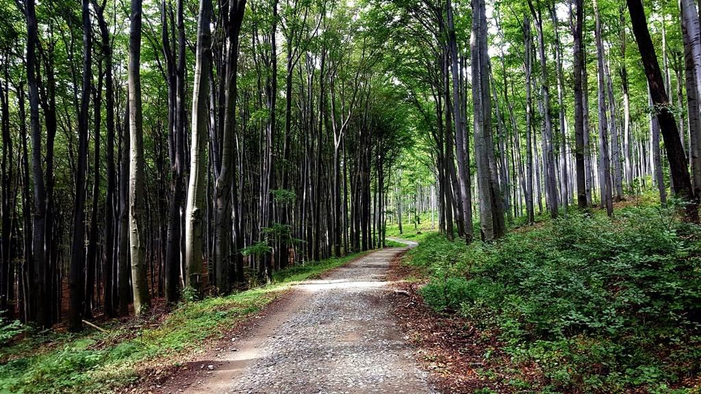 A Kassai erdő