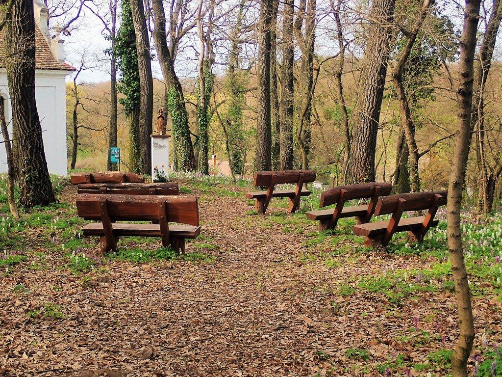 A Majkpusztai Kamalduli Remeteség ősfás parkja