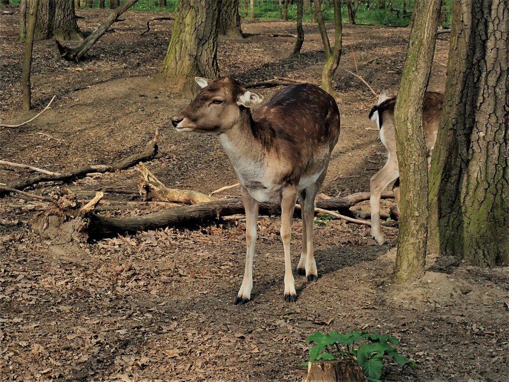 A Malomerdő Vadászház és Panzió vadasparkja