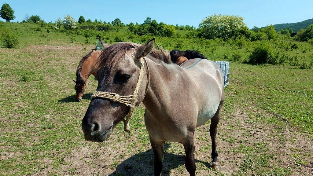 Kíváncsi és kedves lovakkal is találkoztunk