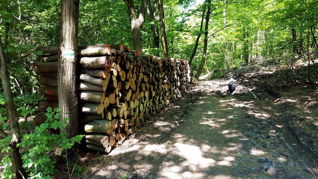 Végre beértünk a hűvös erdei ösvényre