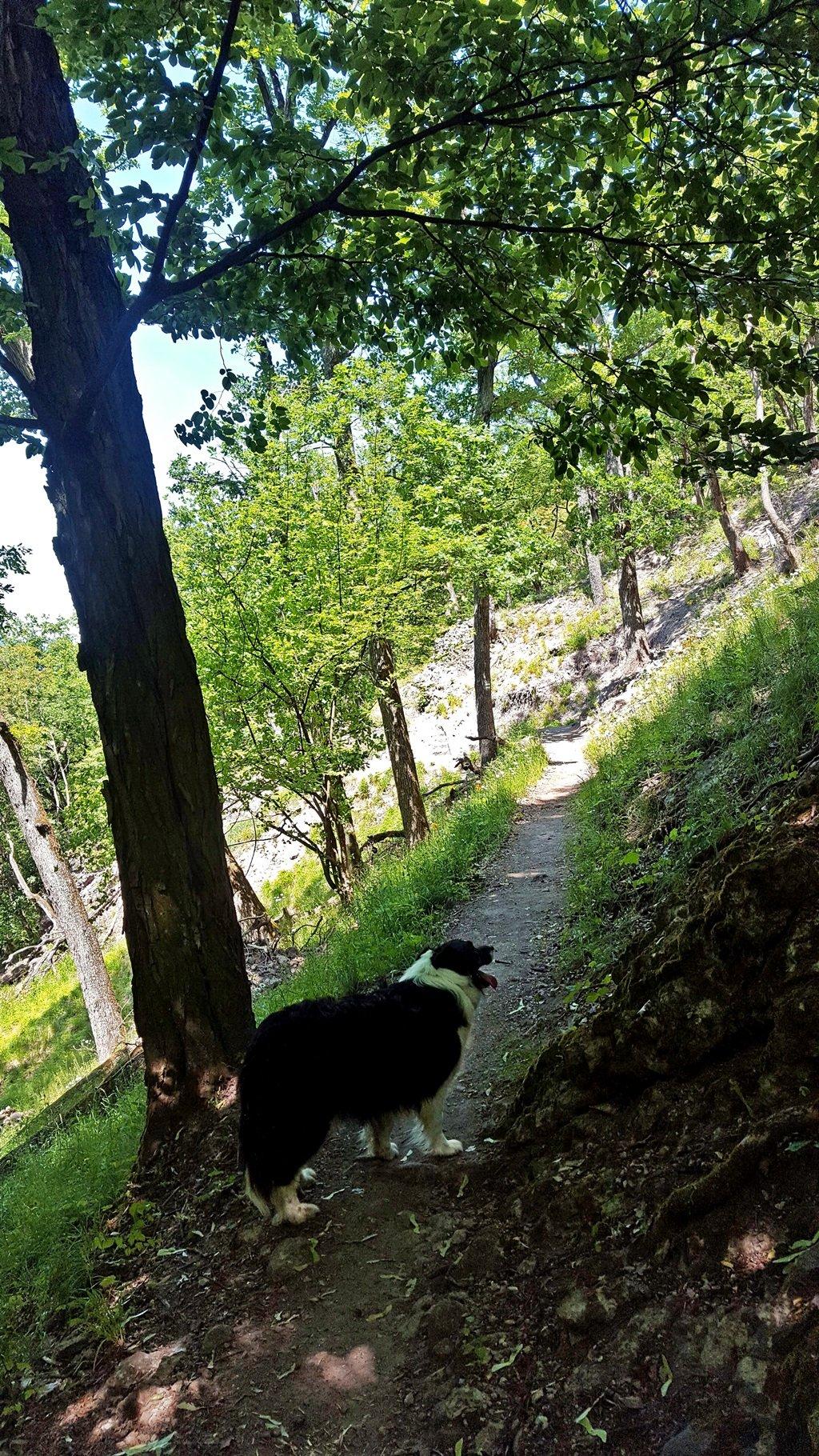 Az ösvény kutyával is teljesen jól járható