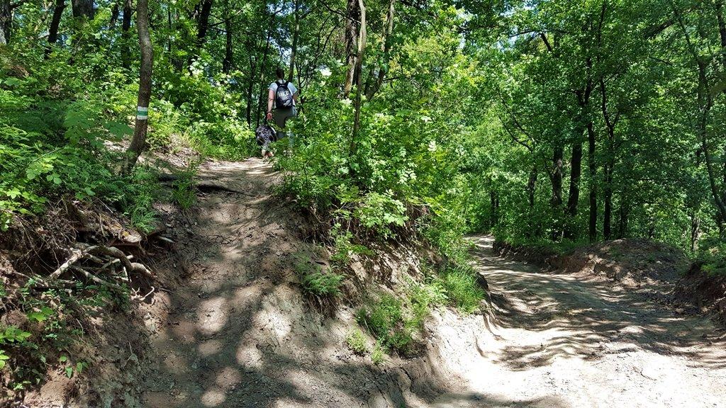 A Jenő-kunyhó után kiérve az erdészeti útra, balra fel egy keskeny ösvényen folytatjuk az utunk