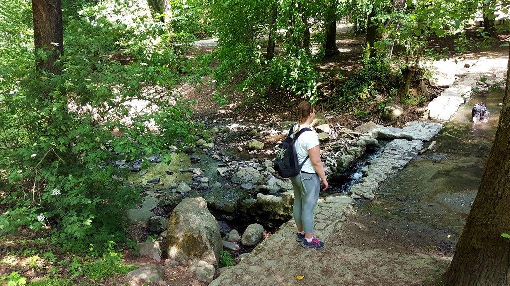Hamarosan kiérünk az Apát-kúti-patak, Bertényi Miklós Füvészkerthez
