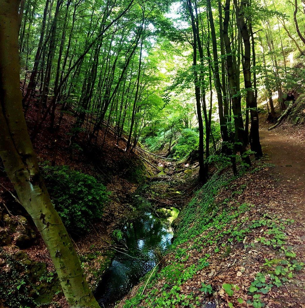 Itt már gyönyörködhetünk az Apát-kúti-patak vadregényes medrében