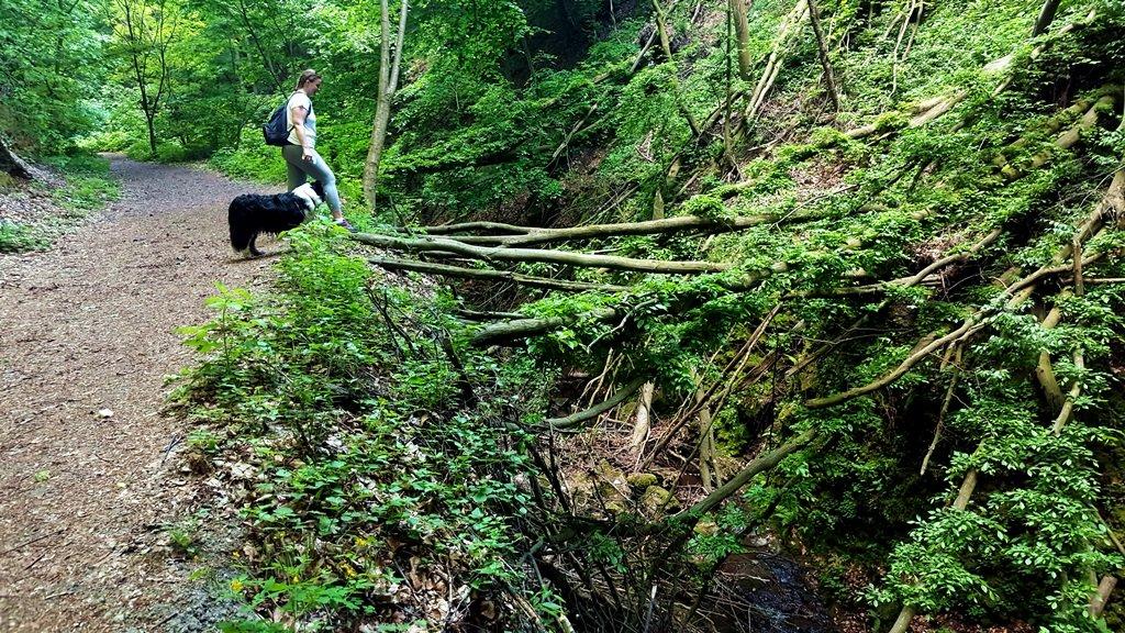 Gyönyörködhetünk az Apát-kúti-patak vadregényes medrében