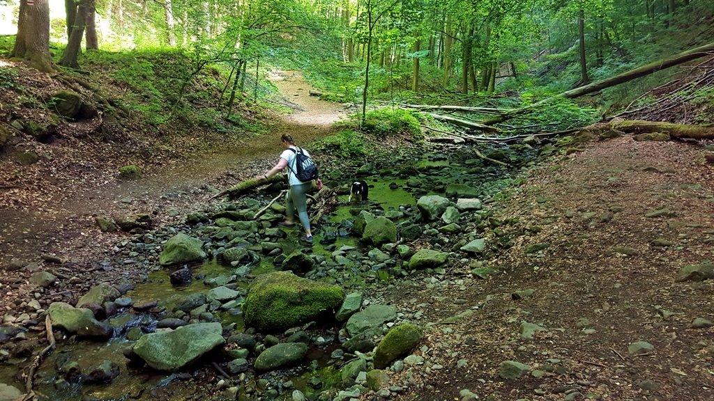 Az ösvény lassan leereszkedik a patakhoz és többször is átkelünk rajta