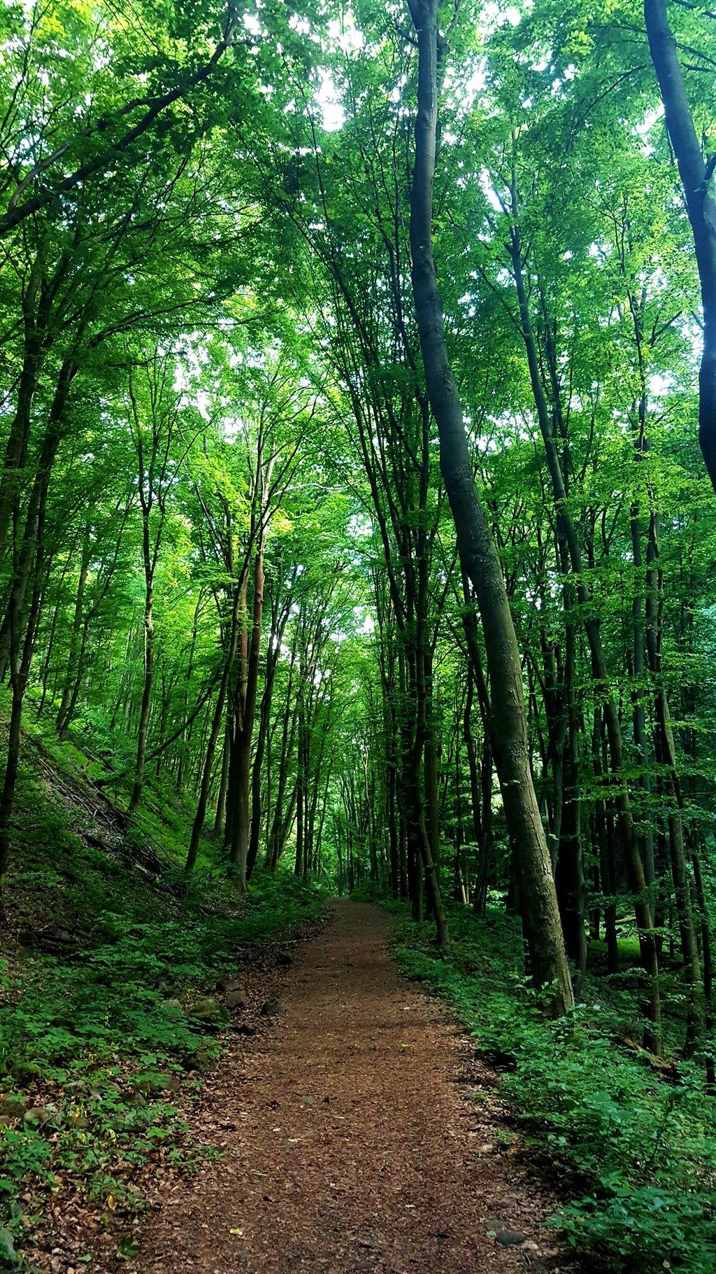 Csodás az erdő!