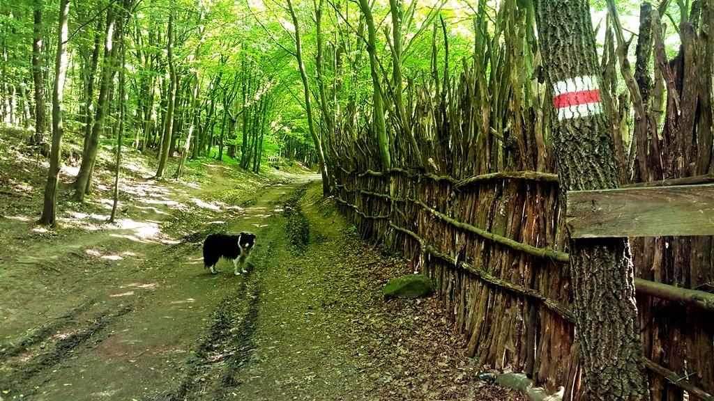 A Dharma Kincse Zen Templom rőzse kerítése mentén térünk vissza kiindulási pontunkra