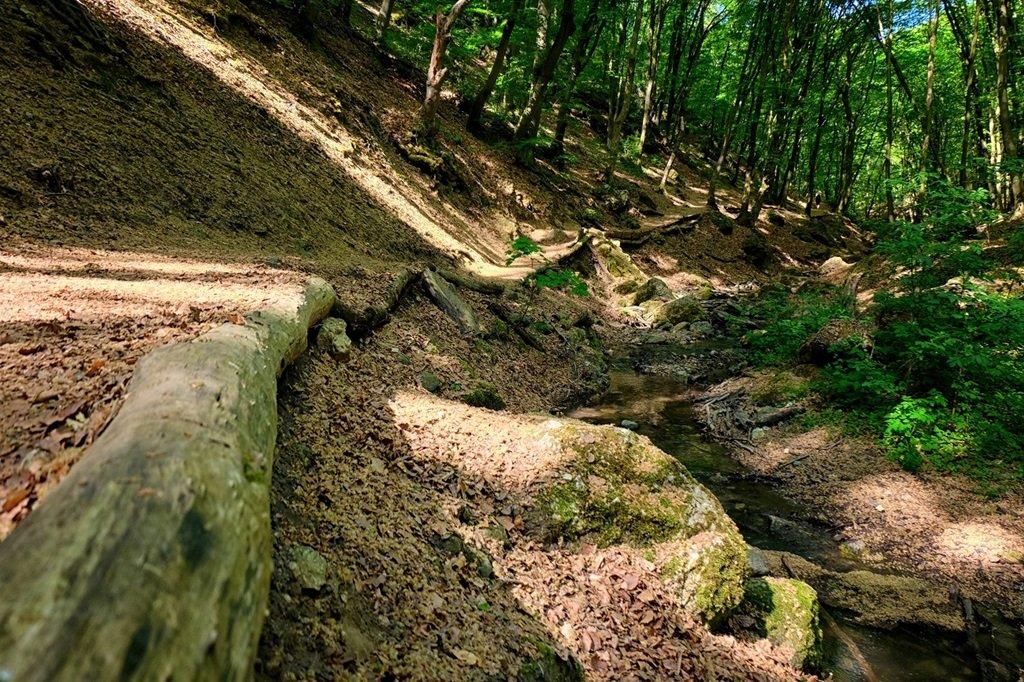 Kiépített ösvény a patak mellett