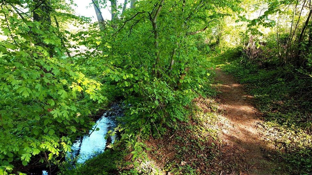 Kellemes árnyas ösvényre lépünk