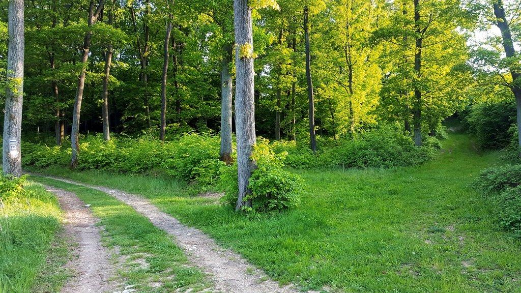 Ennél a kereszteződésnél a fűvel borított erdészeti útra kanyarodunk jobbra