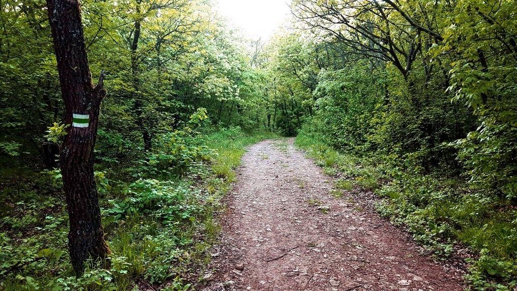 A főúton egyenesen át az erdőben ismét a zöld jelzésre jutunk