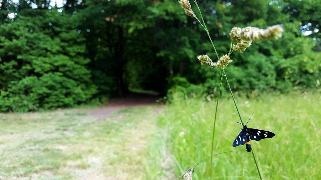 Az apátsági romoktól egyértelmű ösvény vezet a Klastrom-kúthoz