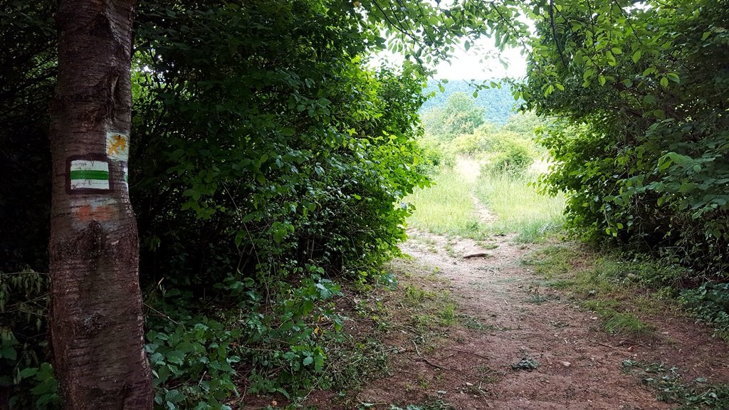 A forrástól a zöld jelzésen haladunk tovább, átvágunk a Pilis-hegy alatti földeken