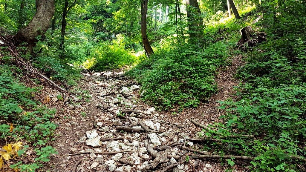Ha elmélázunk nehezen vesszük észre a keskeny ösvényt, amely jobbra felfelé vezet. Erre kell továbbmenni
