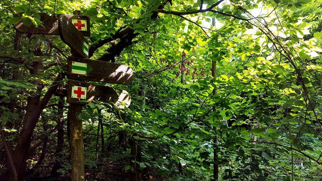 A fák közé érve, megerősítésként feltűnik egy útjelző. Pilis-tető felé haladunk tovább.