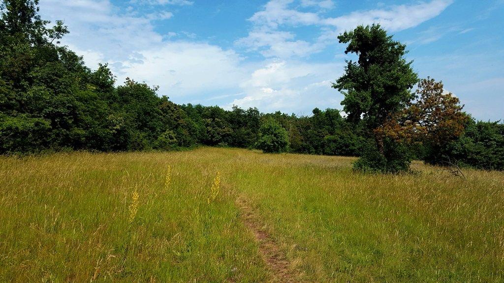 A mező közepén tartunk az erdős rész felé