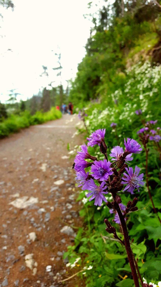 Csodaszép vadvirágok az út mentén