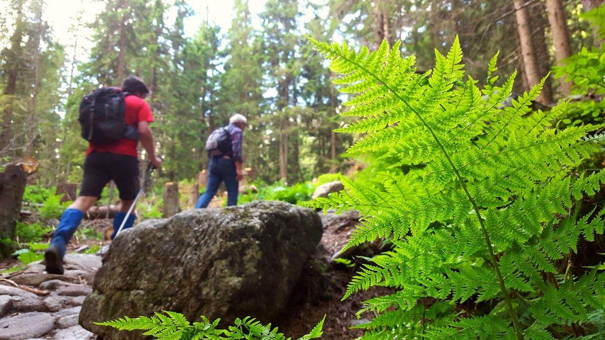 Az útvonal alsó szakaszán könnyű erdei séta vár ránk
