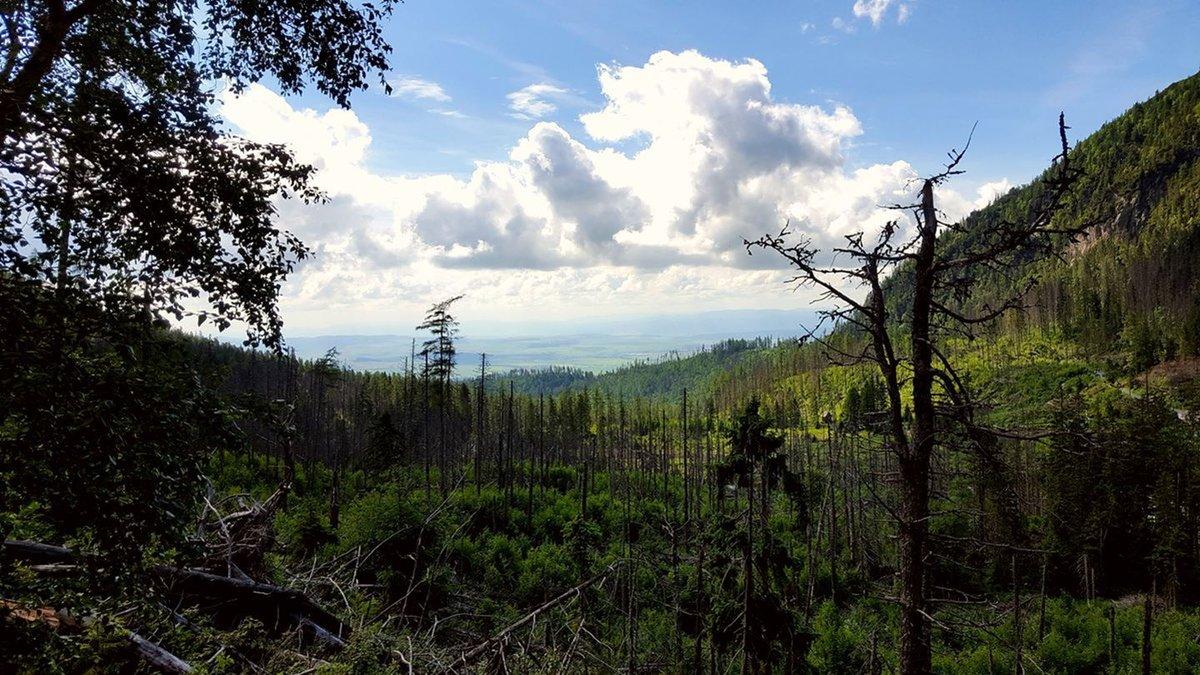 A 2004-es tomboló szélvihar maradványai még ma is látszódnak a növényzeten
