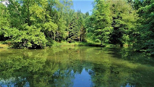Botanikus kert az erdő mélyén: Az Agostyáni arborétum és Baj kálváriája