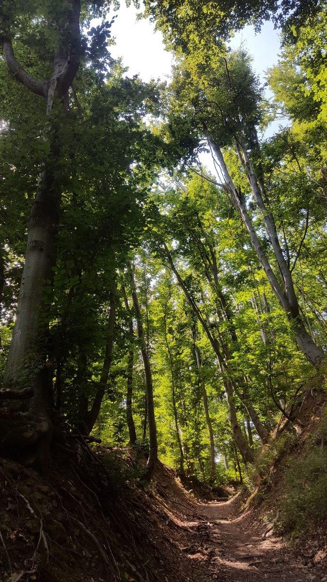Árnyékot adó magas fák mindenütt