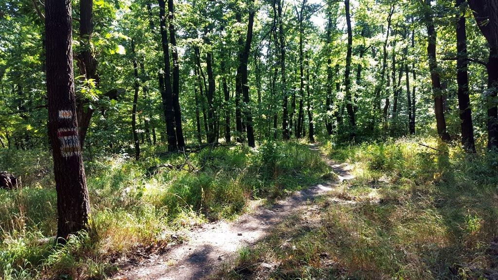 A kerítés után ismét az erdőben, immár a piros jelzést követve az ösvényen