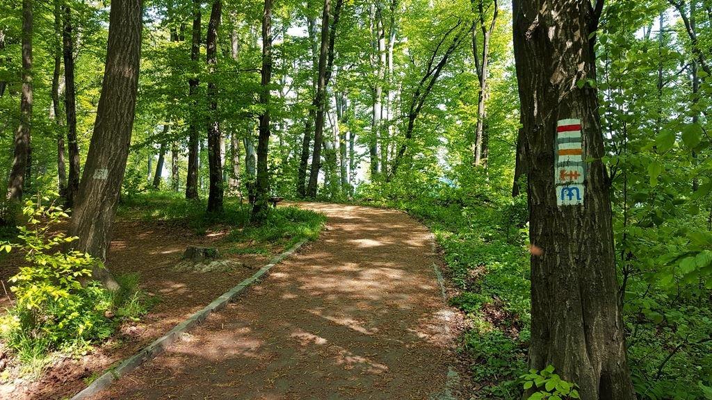 Ezen az ösvényen maradunk, ami bele is fut a Rezső-kilátóba