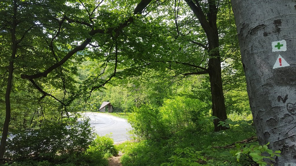Hangulatos keskeny ösvény visz a Két-bükkfa-nyeregig