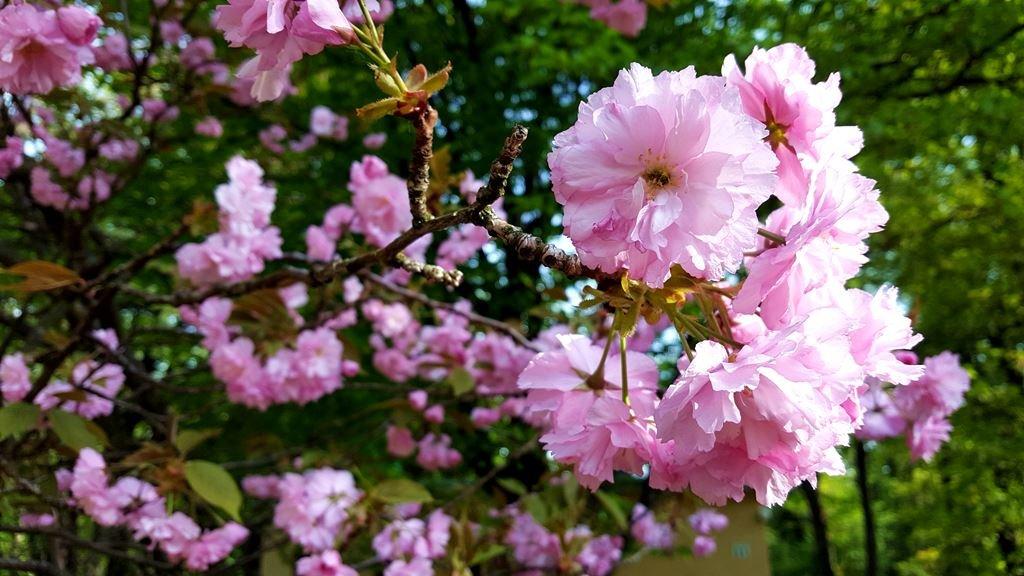 Tavasszal is csodaszép
