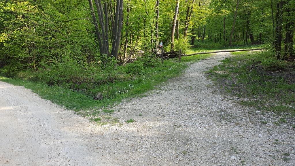 Az elágazásnál jobbra bekanyarodunk az erdőbe és innen követjük a piros körtúra jelzést