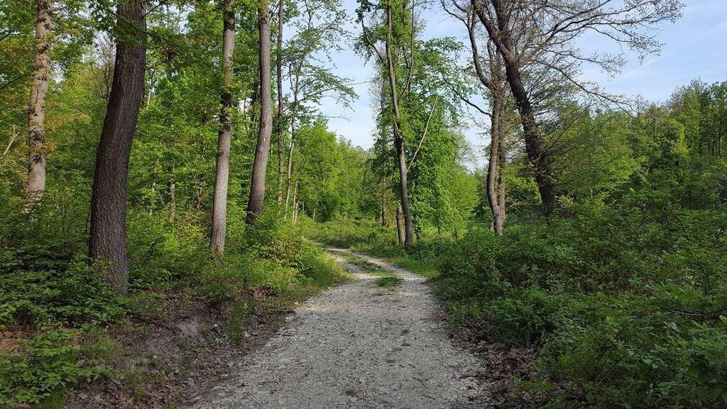 A keskeny ösvényről balra rákanyarodunk erre a szélesebb útra