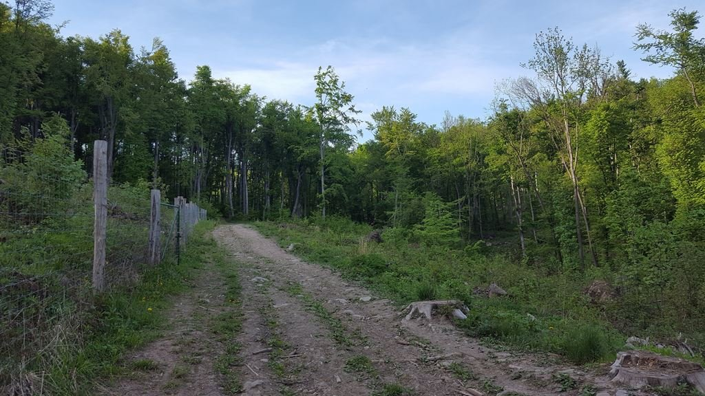 A Hideg-lyuk után a kék sáv jelzést követjük egy erdőirtás felé gyalogolva