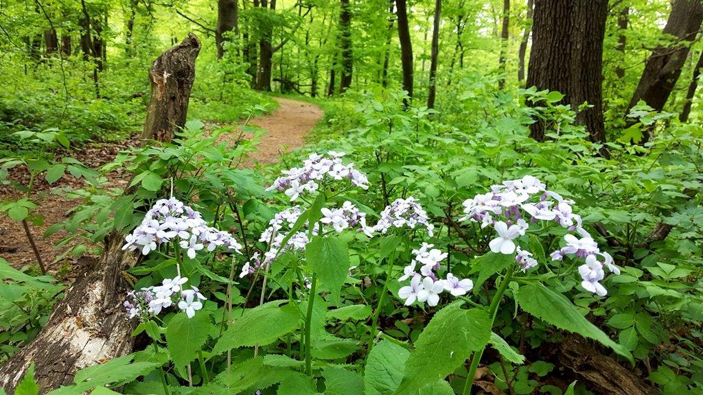 Kellemes egynyomos kis ösvény kanyarog az erdőben