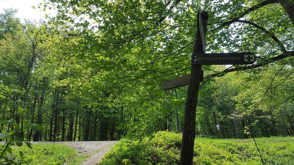 Az ösvény egyszer csak ketté ágazik, mi itt egyenesen kikanyarodunk az erdőből az aszfaltútra, majd a túloldalán visszafordulunk Dobogókő felé