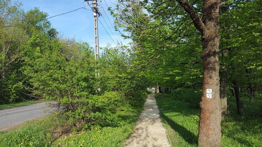 Ezen a kellemes kis gyalogúton visszatérünk Dobogókő központjába