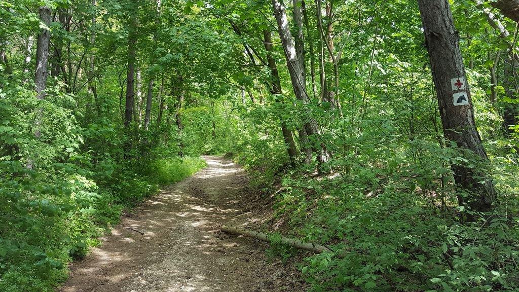 Az erdősávhoz érve továbbra is a piros keresztet figyeljük a fákon