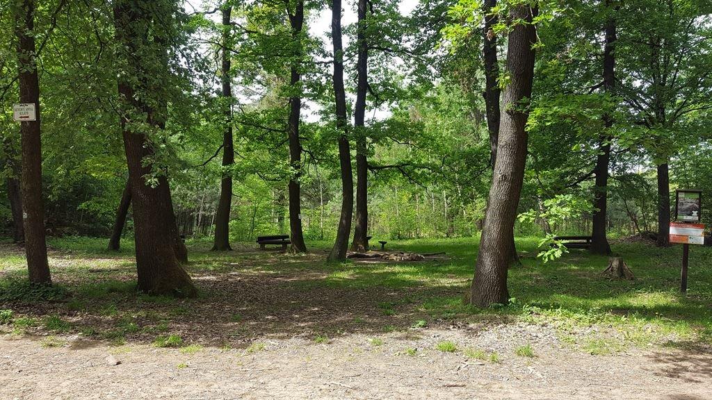 Hamarosan egy tisztásra érünk, az egyik fán fel is tűnik a Dévényi Antal-kilátó irányába mutató tábla