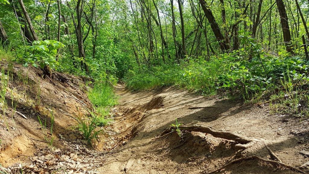 Az erdei talaj egyre inkább omladékossá süppedős homokká változik