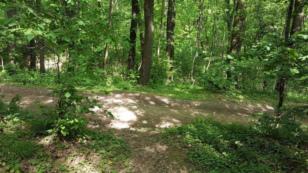 Az ösvény egy szélesebb dózerútra ér ki, amelyen jobbra fordulunk