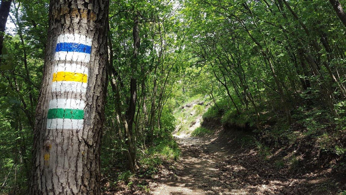 Ezen az ösvényen a kék-, a sárga- és a zöld jelzés egyesül
