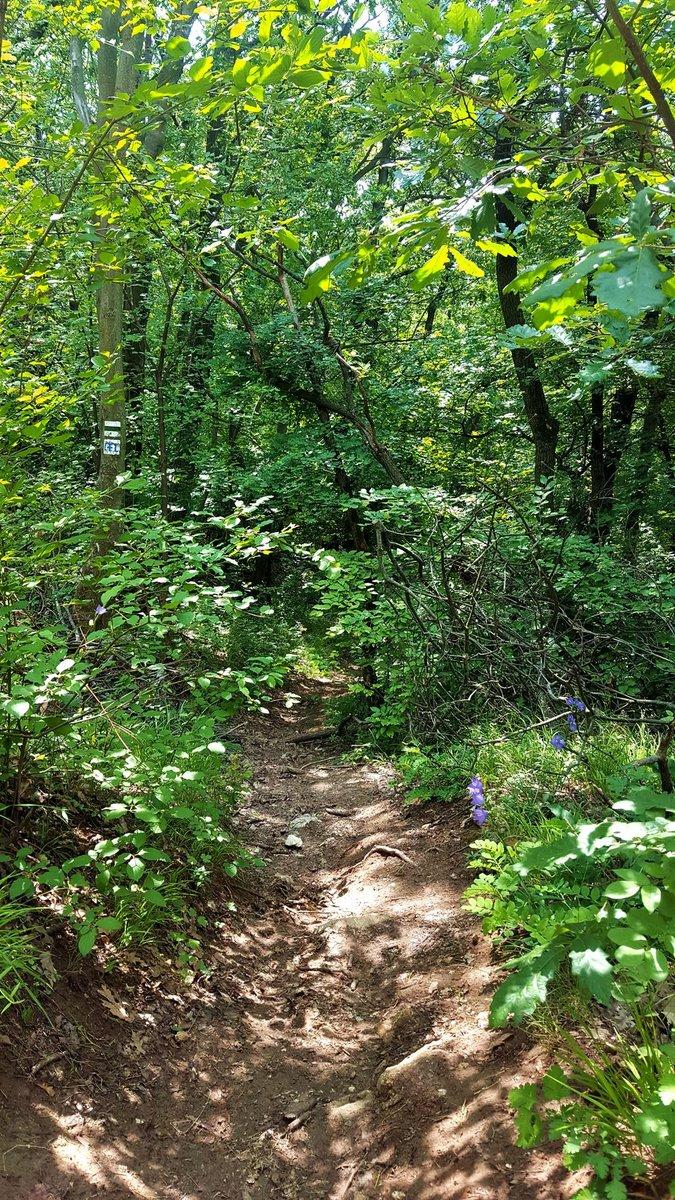 Majd balra le, a fák között megbúvó és nehezen észre vehető zöld jelzésen tovább