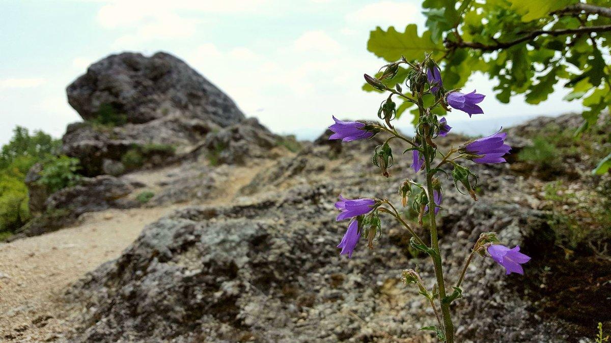 Tavasszal még sok szép virág nyílik