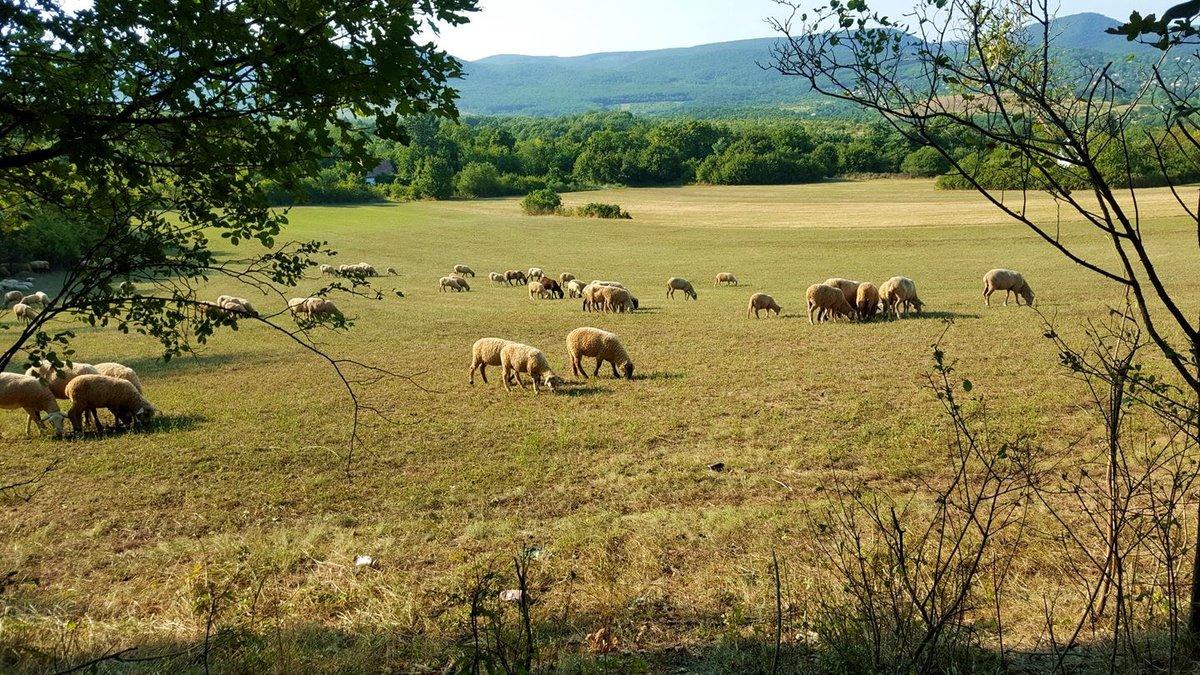 Ahogy kellemesebb az idő, kiengedik legelni az állatokat